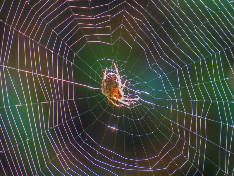 Spider, Center for Urban Horiculture/Union Bay Wild Area. Seattle WA
