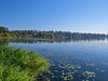 Lake Washington, Center for Urban Horiculture/Union Bay Wild Area. Seattle WA
