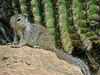 Tucson AZ. Sonoran Desert Museum.