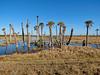 Viera Wetlands, Melbourne FL