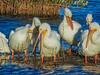 Blackpoint Wildlife Drive, Merritt Island NWR, FL