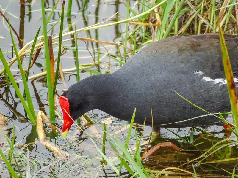 Ricth Grissom Memorial Wetlands, Viera, FL