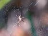 Spider, Fort Mantanzas National Monument, FL