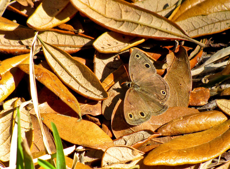Guana River Reserve, St Augustine, FL 4/10