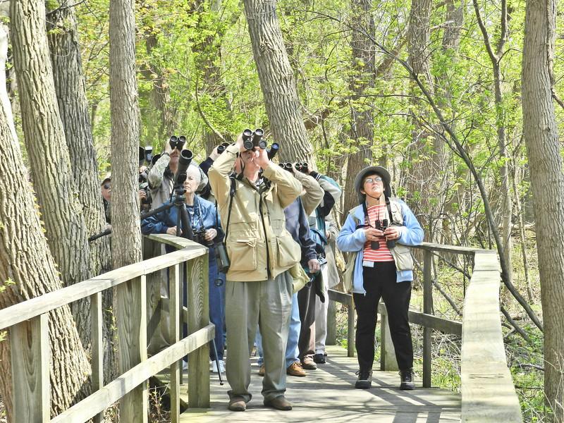 The Biggest Week in American Birding, Magee Marsh, OH 5/11