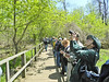 The Biggest Week in American Birding, Magee Marsh, OH 5/11