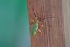 Insect, Tranquilo Bay Lodge, Bocas del Toro, Panama