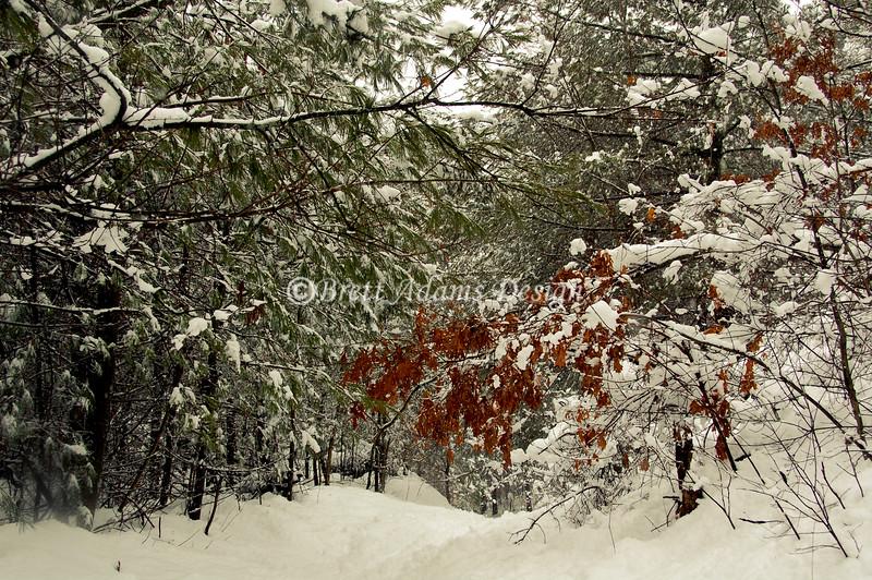 Pine Bush Reserve - Colonie, NY