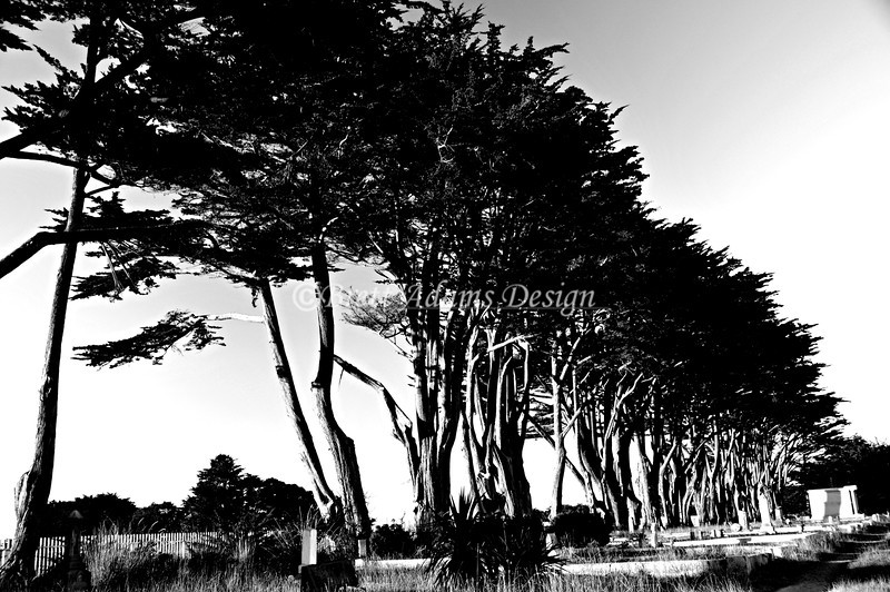 Cemetery on Pacific Coast Highway 1, California