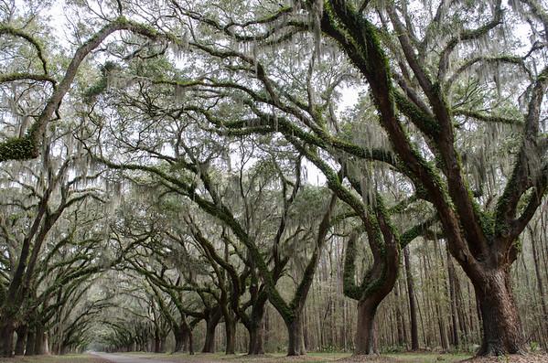 Wormsloe Historic Site; Savannah, GA