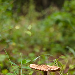 Lake Conestee Nature Park; Greenville, SC
