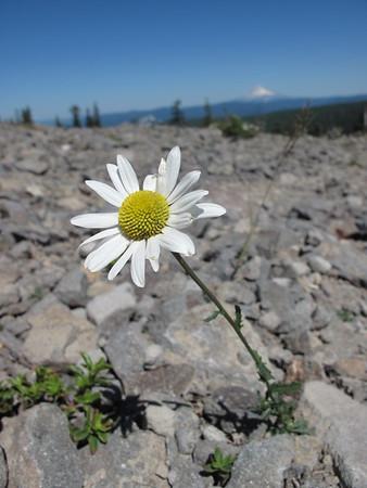 Mount Hood; Oregon