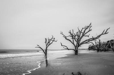 Bone Yard Beach at Botany Bay Plantation; Edisto Beach, SC