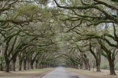 Wormsloe Historic Site; Savannah, GA