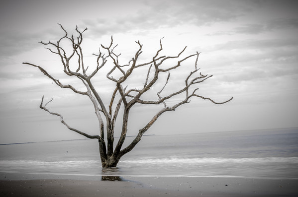 Bone Yard Beach at Botany Bay; Edisto Beach, SC