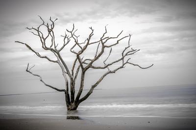 Bone Yard Beach at Botany Bay; Edisto Beach, SC