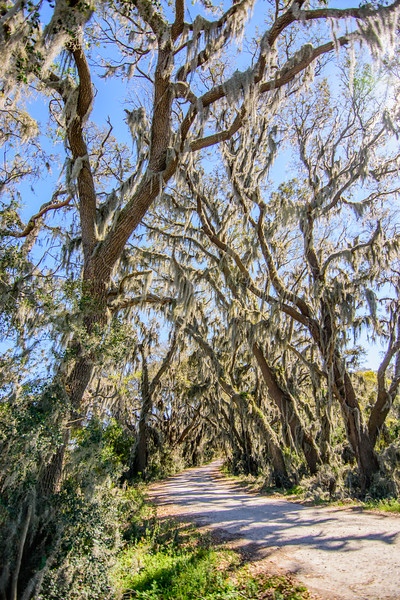 Savannah National Wildlife Refuge; Hardeeville, SC
