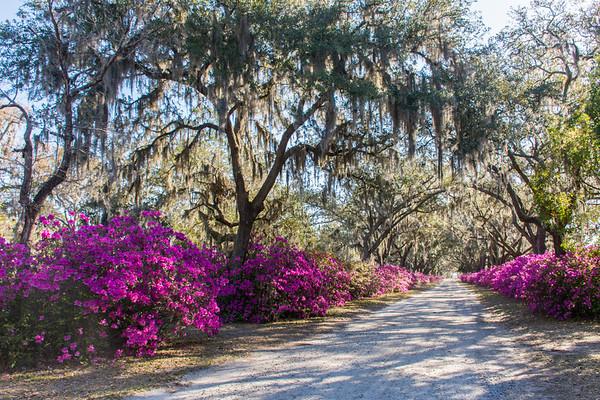 Bonaventure Cemetery; Savannah, GA