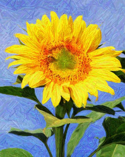 Sunny Art