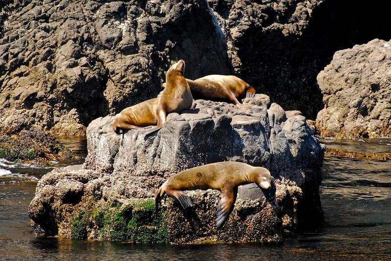 Sea Lions Rock<br /> Anacapa Island, CA