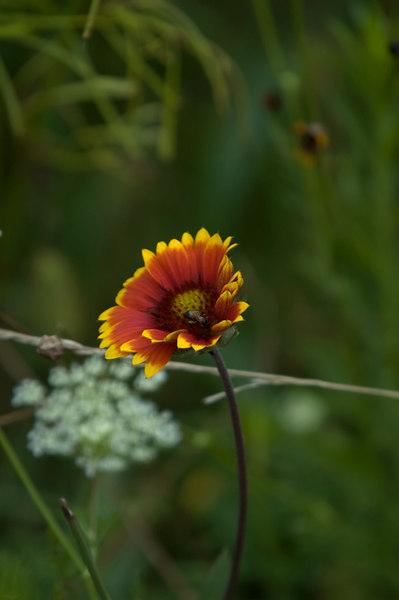 Landscape and Floral
