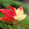 <p>Leaf.</p>
