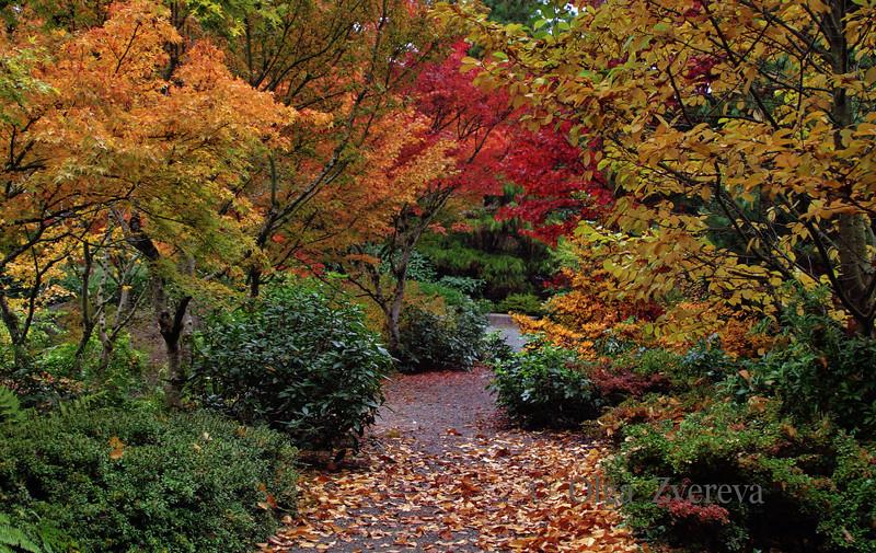 <p>Autumn in Bellevue Botanical Garden, Bellevue, Washington, USA.</p>