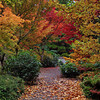 <p>Autumn in Bellevue Botanical Garden, Bellevue, Washington, USA.</p>