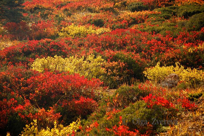<p>Autumn colour at Mount Rainier National Park, Washington, USA</p>