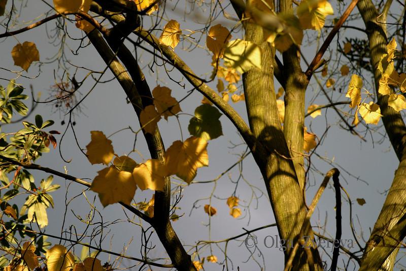 <p>Washington Park Arboretum, Seattle, Washington, USA</p>