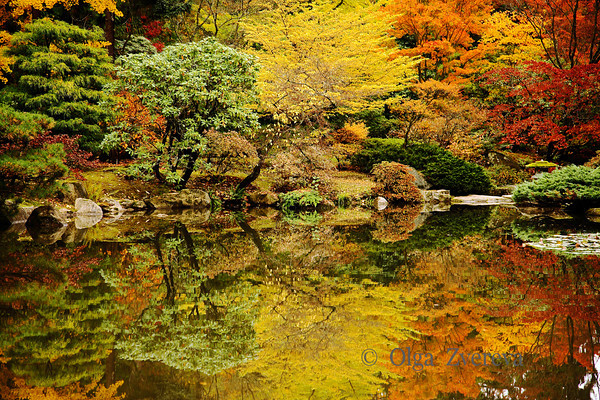 Parade of colors at Japanese Garden, Washington Park Arboretum, Seattle, Washington, USA