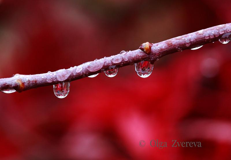 <p>Rainy Day</p>