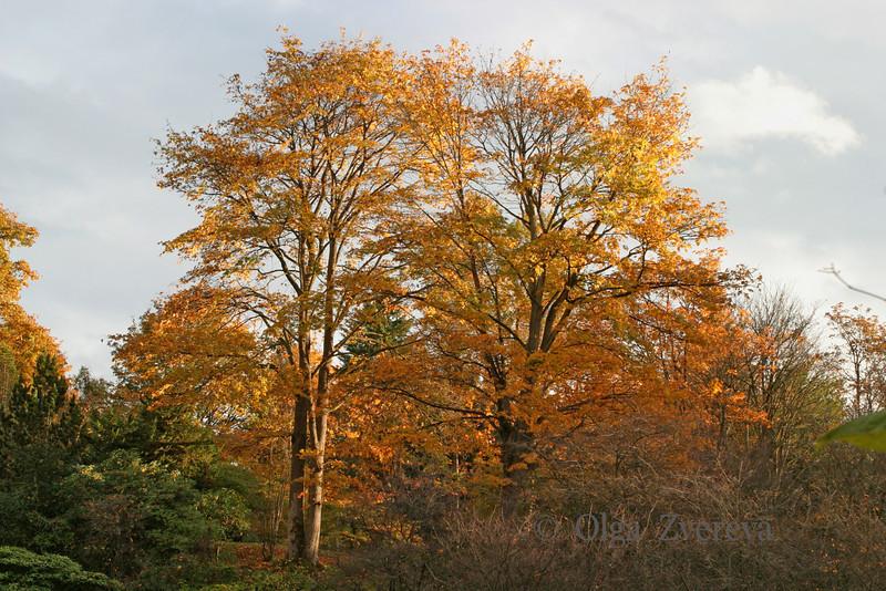 <p>Trees in the autumn. Washington Park Arboretum, Seattle, Washington, USA</p>