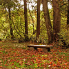 <p>Fall in Washington Park Arboretum, Seattle, Washington, USA</p>