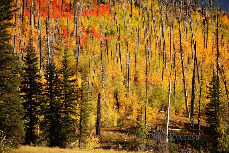 <p>Fall at North Rim, Grand Canyon National Park, Arizona, USA</p> <p>September 2009</p>
