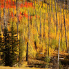 <p>Fall at North Rim, Grand Canyon National Park, Arizona, USA</p> <p>September 2009</p>