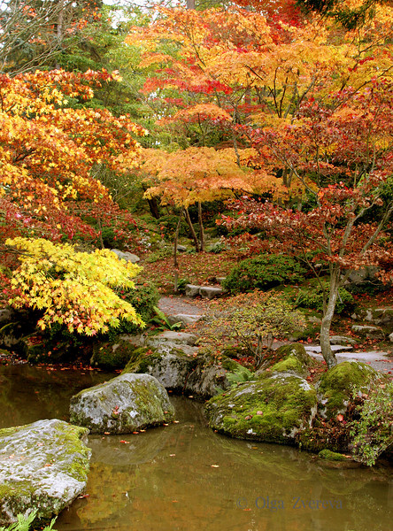 <p>Autumn in Japanese Garden. Washington Park Arboretum, Seattle, Washington, USA</p>
