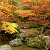 Autumn in Japanese Garden. Washington Park Arboretum, Seattle, Washington, USA
