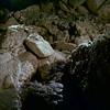 <p>Minnetonka Cave, Idaho, USA</p>