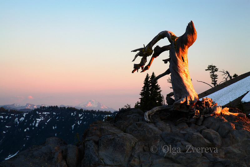 <p>Dead tree, Crater Lake National Park, Oregon, USA</p>