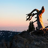 <p>Dead tree, Crater Lake National Park, Oregon, USA</p>