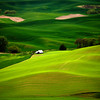 Green Fields. Palouse, Washington, USA