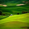<p>Green Fields. Palouse, Washington, USA</p>