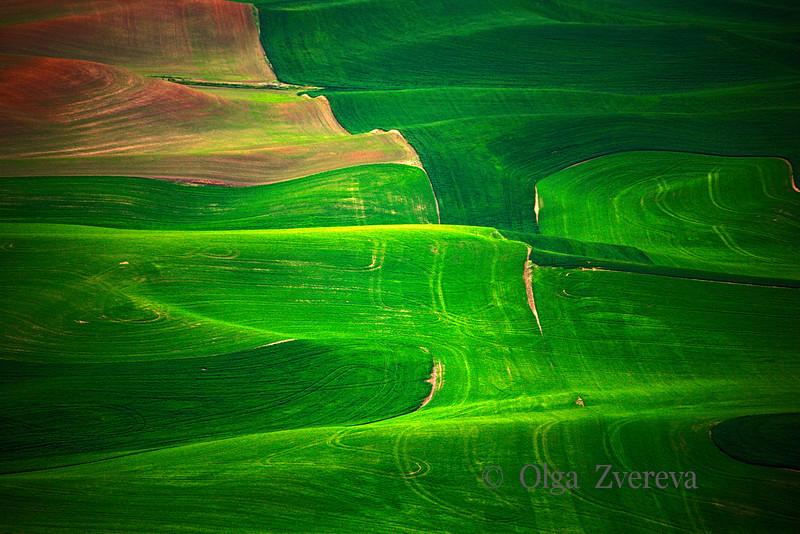 <p>Green. Palouse, Washington, USA</p>