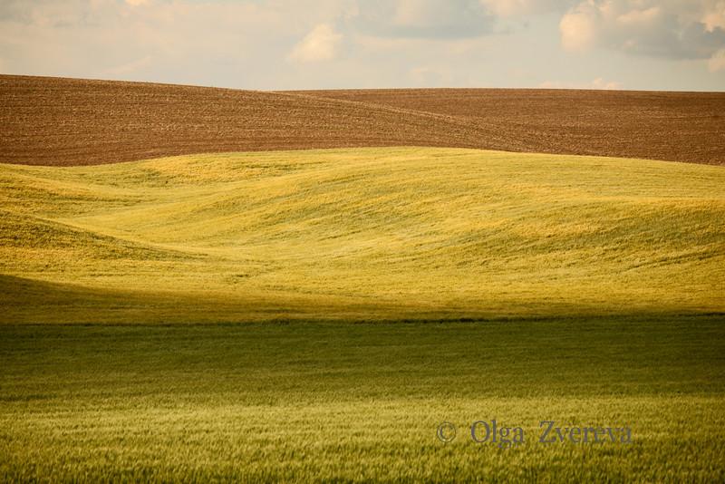 <p>Fields in Eastern Washington, USA</p>