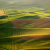 <p>Green Ocean, Palouse, Washington, USA</p>