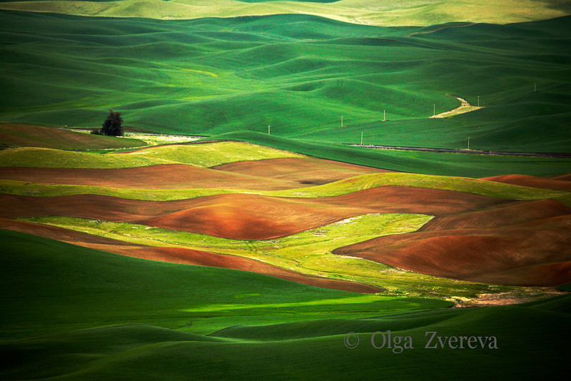 <p>Fields. Palouse, Washington, USA</p>