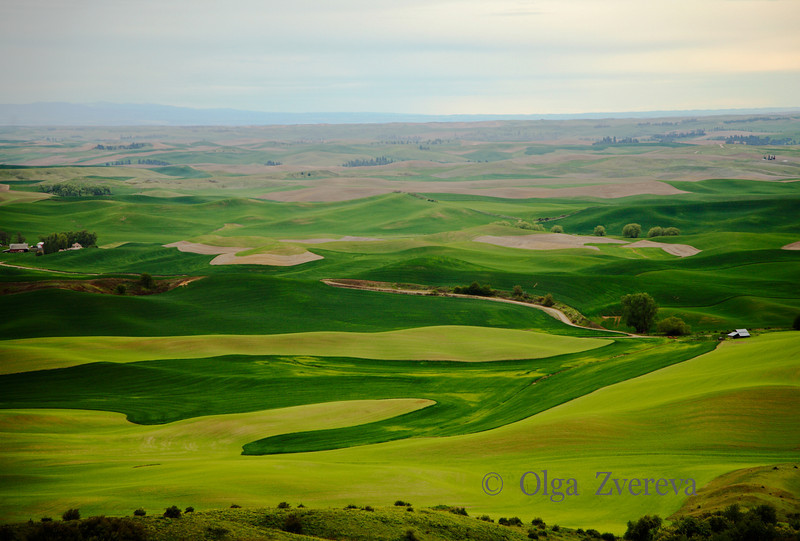 <p>Green Fields. Palouse, Washington, USA</p>