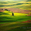 Silky Green. Palouse, Washington, USA