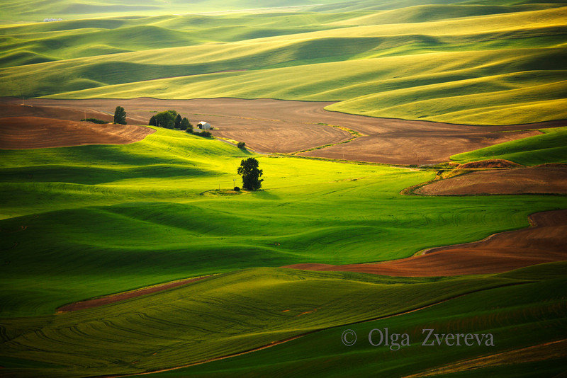 <p>Silky Green. Palouse, Washington, USA</p>